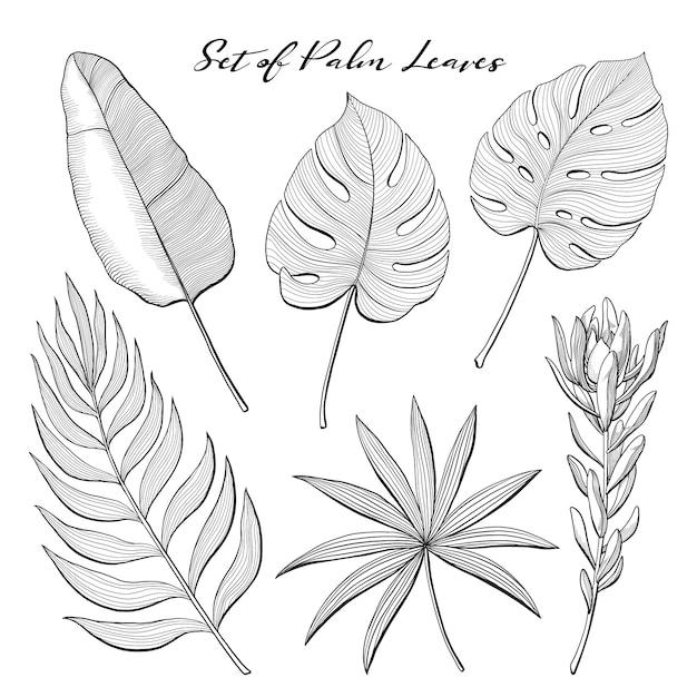 Satz von hand gezeichnete palmblätter und proteablume Premium Vektoren