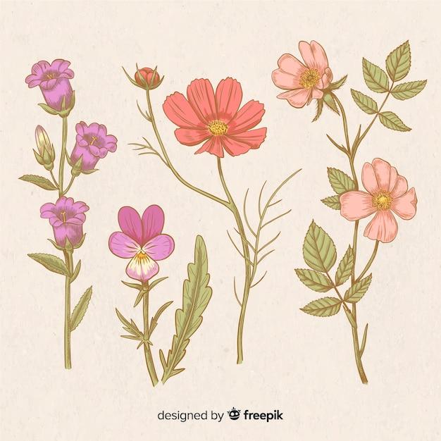 Satz von hand gezeichnete weinleseblumen Kostenlosen Vektoren
