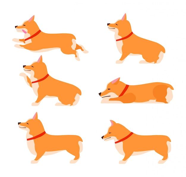 Satz von posen und emotionen hund. welsh corgi set. hund unterrichten. bleib, warte, setz dich Premium Vektoren