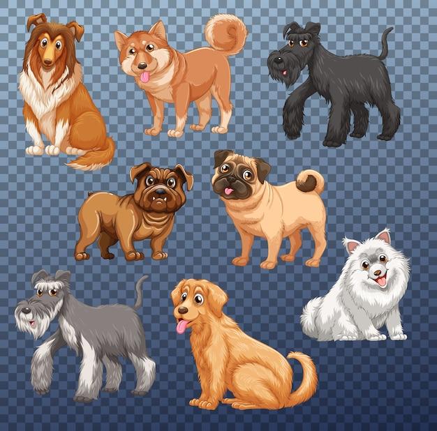 Satz von verschiedenen hunden isoliert Kostenlosen Vektoren