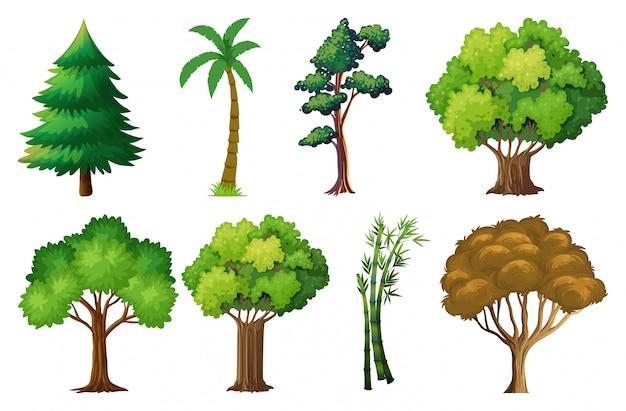 Satz von verschiedenen pflanzen und bäumen Kostenlosen Vektoren