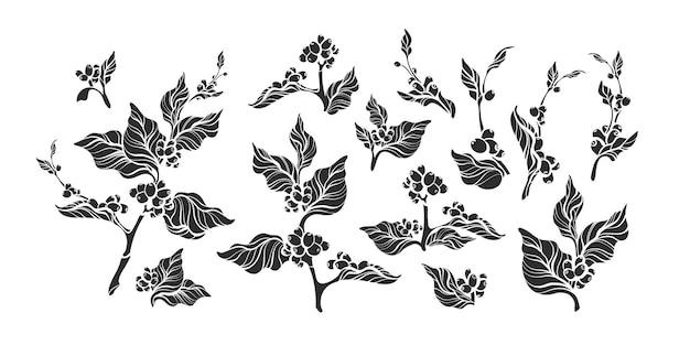 Satz weinleseform-kaffeezweig. schwarze schattenbildillustration lokalisiert auf weißem hintergrund Premium Vektoren