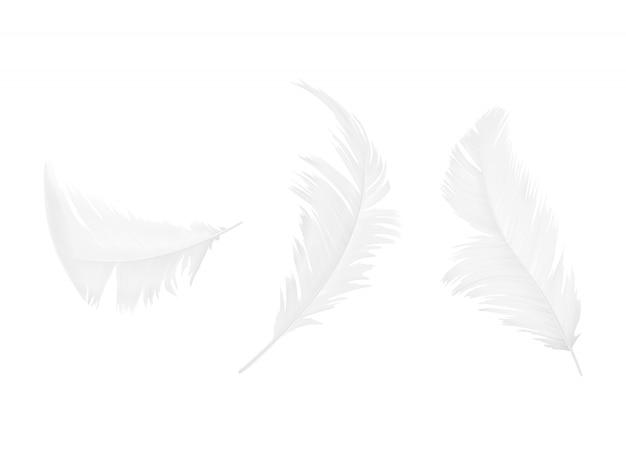 Satz weiße vogel- oder engelsfedern in den verschiedenen formen, lokalisiert auf hintergrund Kostenlosen Vektoren