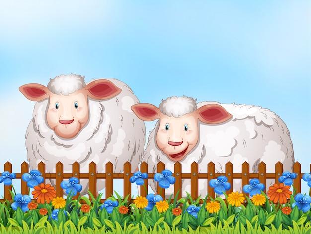 Schafe im garten Premium Vektoren