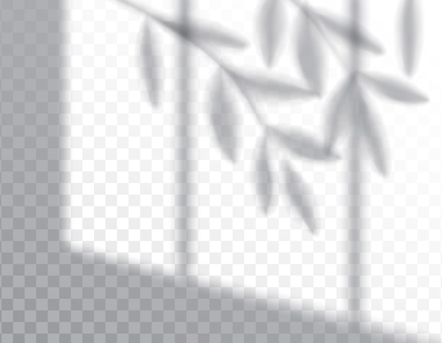 Schatten des blattes der pflanzen auf überlagerungseffekten Premium Vektoren
