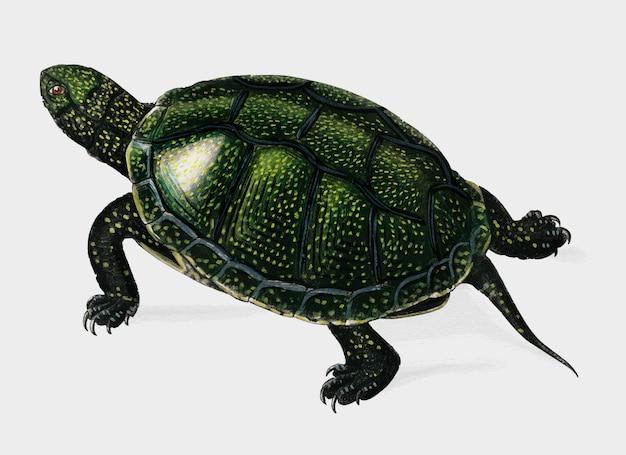 Schildkröte Kostenlosen Vektoren