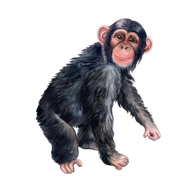 Schimpanseaffebuntes lokalisiert. aquarell Premium Vektoren
