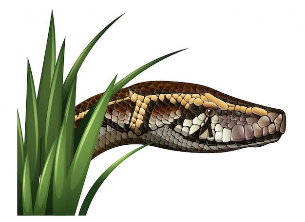 Schlangenkopf hinter grünem gras Kostenlosen Vektoren