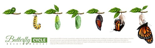 Schmetterlings-metamorphose-horizontales set Kostenlosen Vektoren