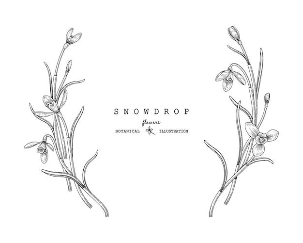 Schneeglöckchenblume hand gezeichneter dekorativer vektor. Kostenlosen Vektoren