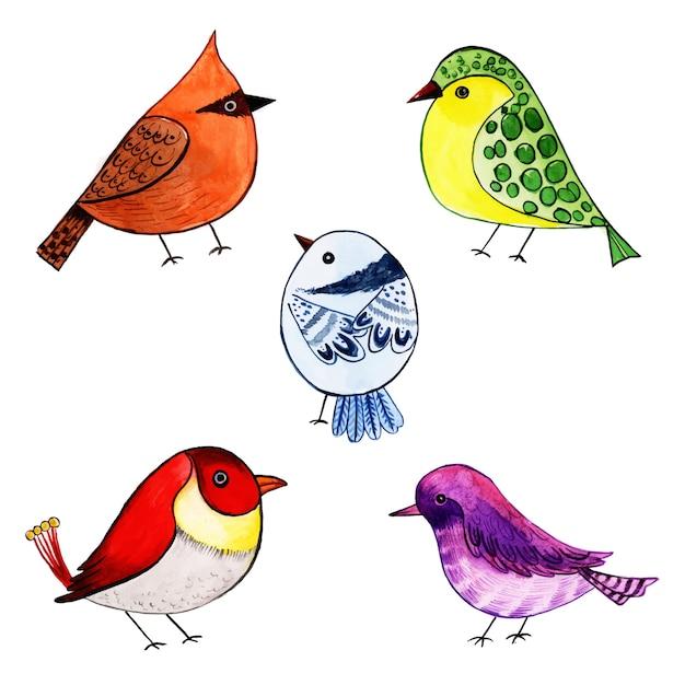 Schöne aquarell exotische vogel-sammlung Premium Vektoren