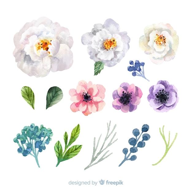 Schöne aquarellblumen und -blätter Kostenlosen Vektoren
