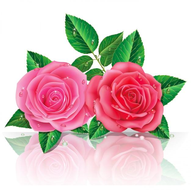 Schöne rosa rosen. Premium Vektoren