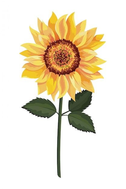 Schöne sonnenblumenzeichnung Premium Vektoren