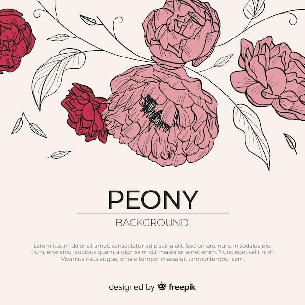 Schöner und eleganter pfingstrosenblumenhintergrund Kostenlosen Vektoren