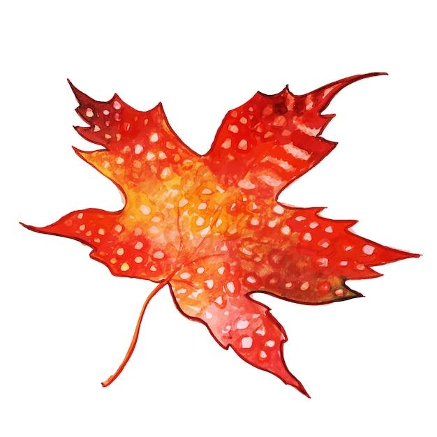 Schönes aquarell autumn leaf Kostenlosen Vektoren