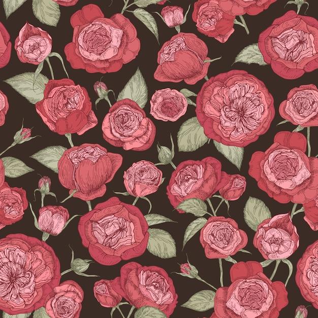 Schönes romantisches nahtloses muster mit blühenden austin-rosen auf schwarzem hintergrund. Premium Vektoren