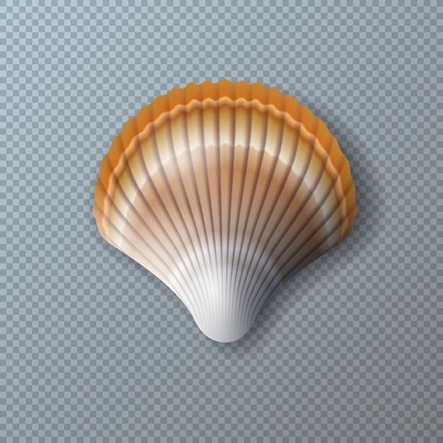 Schönes shell getrennt auf transparentem Kostenlosen Vektoren