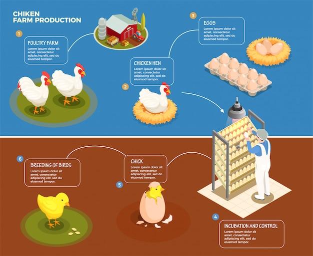 Schritt-für-schritt-schema für die hühnerproduktion von der geflügelfarm bis zur inkubationskontrolle und zucht der isometrischen darstellung von küken Kostenlosen Vektoren