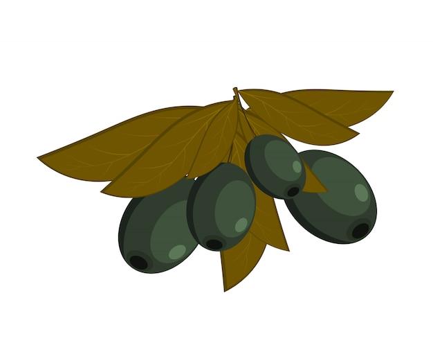 Schwarze oliven mit blättern auf einem weißen hintergrund Premium Vektoren