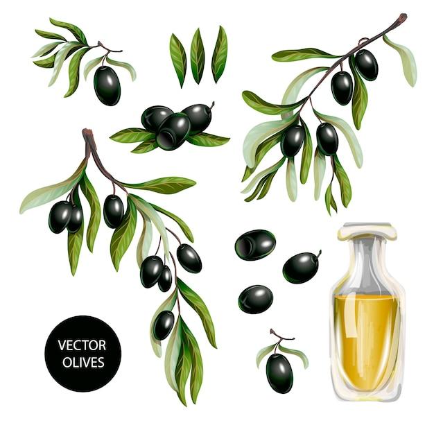 Schwarze oliven und olivenöl getrennt Premium Vektoren