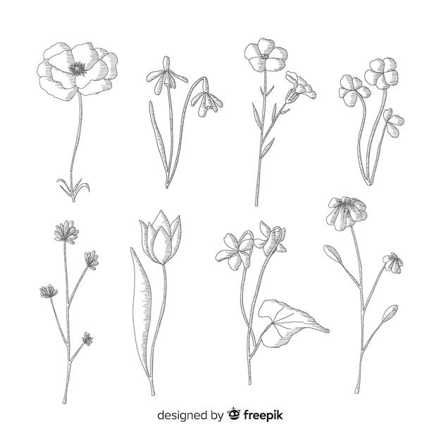Schwarzweiss-entwurf für botanische blumen Kostenlosen Vektoren
