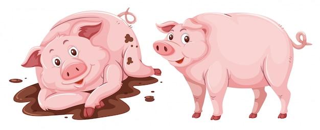 Schwein auf weißem hintergrund Premium Vektoren