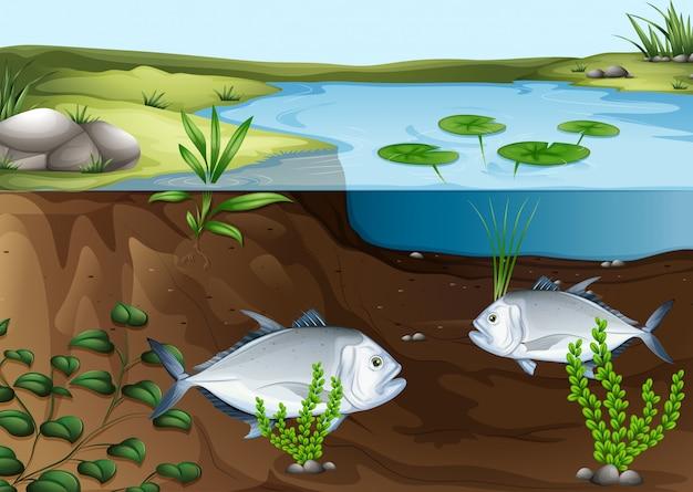 Two fish vektoren fotos und psd dateien kostenloser for Teich mit fischen