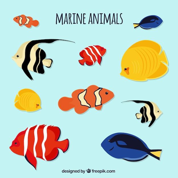 Sea life set Kostenlosen Vektoren