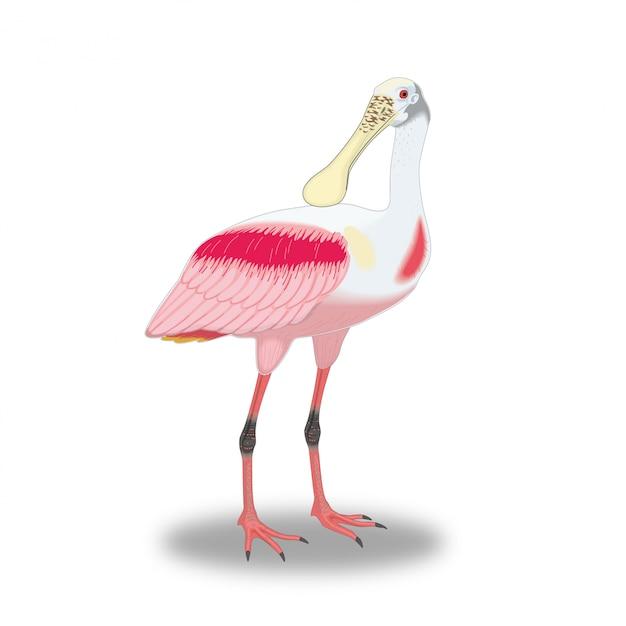 Seltsamer vogel mit einem großen schnabel Premium Vektoren