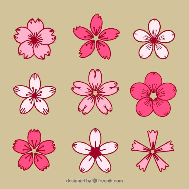 set dekorative kirschblüten  kostenlose vektor