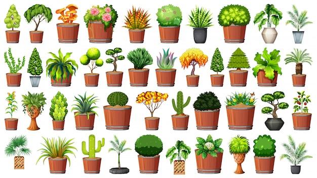 Set der pflanze im topf Kostenlosen Vektoren