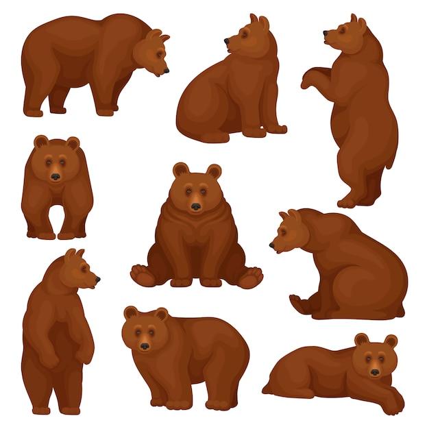 Set großer bären in verschiedenen posen. wilde waldkreatur mit braunem fell. zeichentrickfigur des großen säugetiertiers. Premium Vektoren