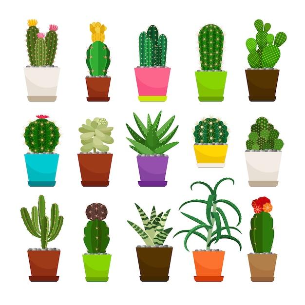 Set kaktus zimmerpflanzen in blumentöpfen Premium Vektoren