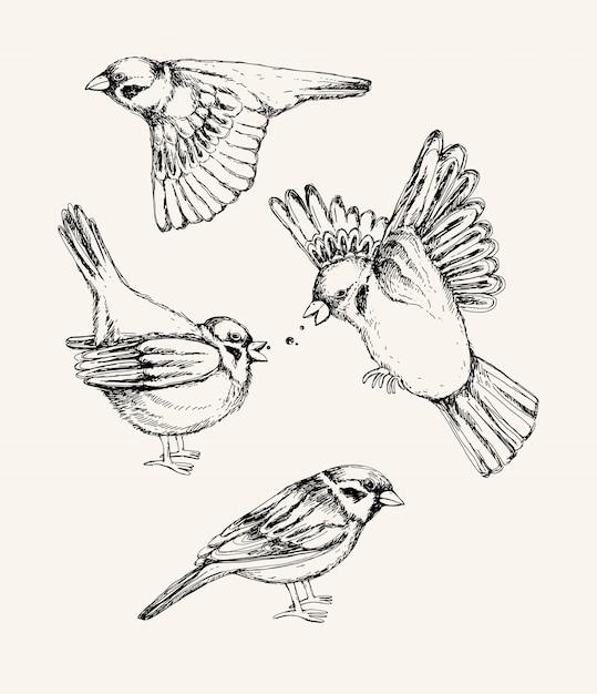 Set mit verschiedenen fliegenden und sitzenden spatzen. hand gezeichnete illustration. Premium Vektoren
