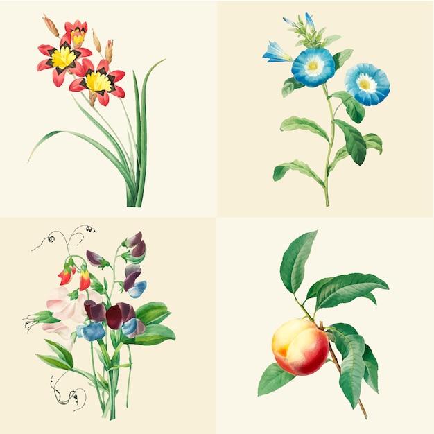 Set schöne blühende wildblumen Kostenlosen Vektoren