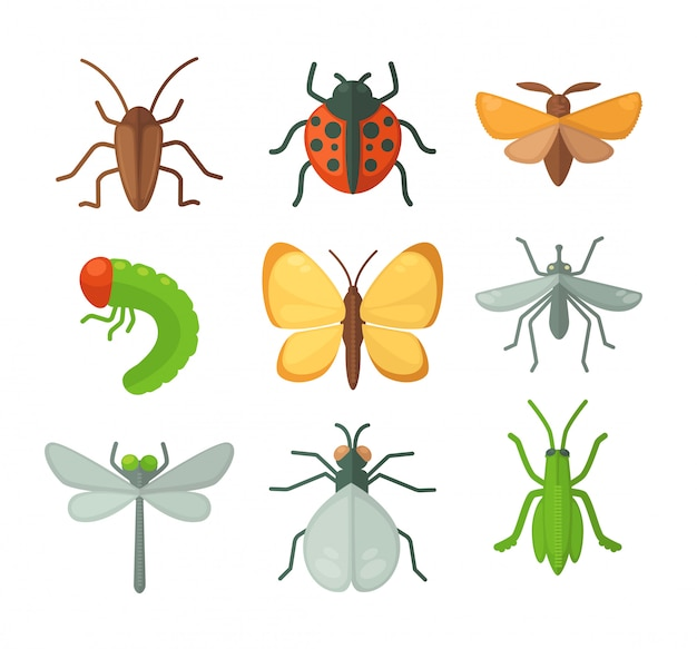 Set verschiedene insekten. vektor-illustration Premium Vektoren