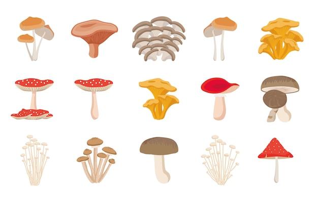 Set verschiedene pilze. cep, pfifferling, honigagar, enoki, morchel, austernpilze, könig auster, shimeji, champignon, shiitake, schwarzer trüffel. Premium Vektoren