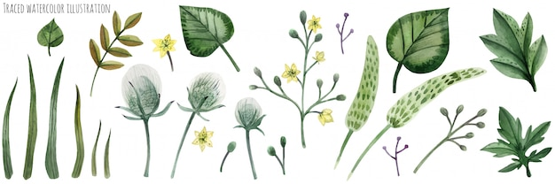 Set von forstpflanzen Premium Vektoren