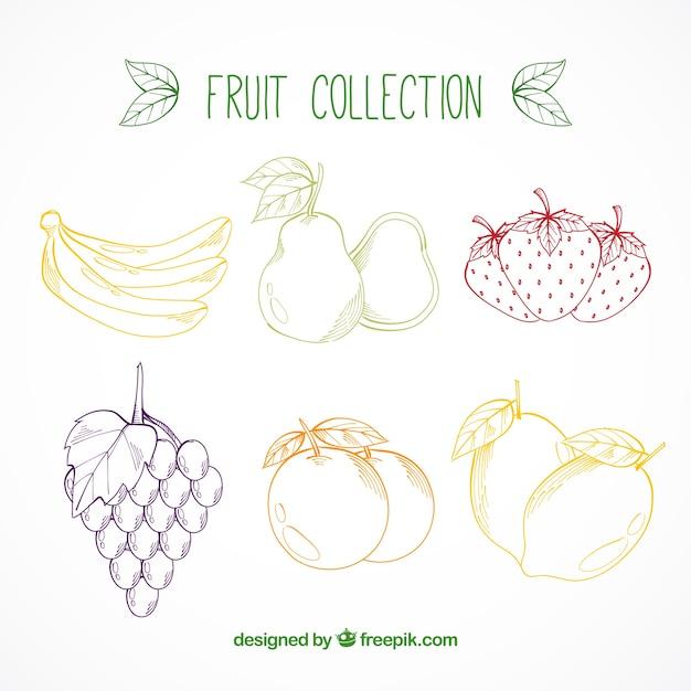 Set von handgezeichneten farbigen Früchten | Download der ...