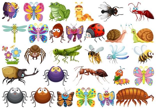 Set von insektenzeichen Kostenlosen Vektoren