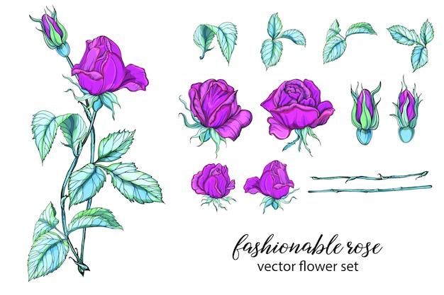 Set von leuchtenden rosenfarben. rose ist rosa. Premium Vektoren
