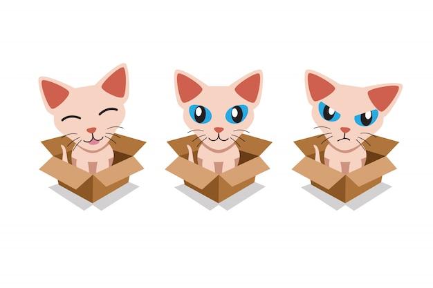 Set von niedlichen sphynx-katze im karton Premium Vektoren