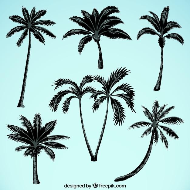 Silhouetten von palmen Kostenlosen Vektoren