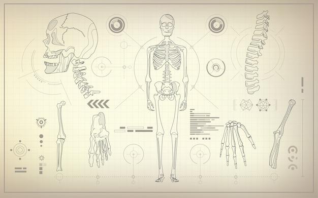 Skelett blaupause Premium Vektoren