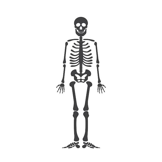 Skelett menschliche Anatomie. Vector Halloween schwarzes Skelett ...
