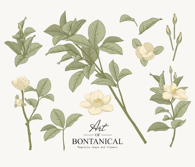 Skizzen-botanik-set. magnolie blatt und blume zeichnungen. schöne linie kunst. illustrationen. Premium Vektoren