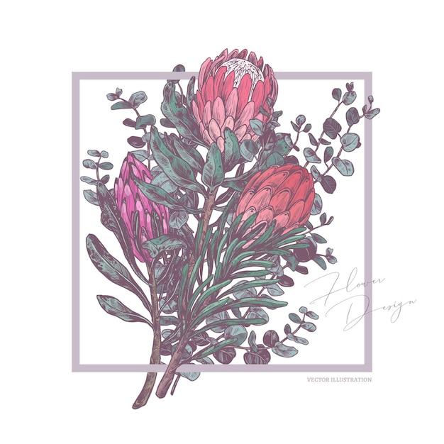 Skizzenzeichnungstrauß der tropischen exotischen blumen protea und eukalyptusillustration Premium Vektoren