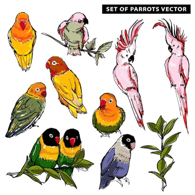 Sommer-vektorhand gezeichnet von den schönen exotischen tropischen papageien Premium Vektoren