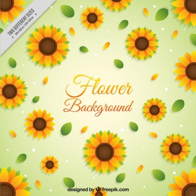 Sonnenblumen hintergrund in flaches design Kostenlosen Vektoren